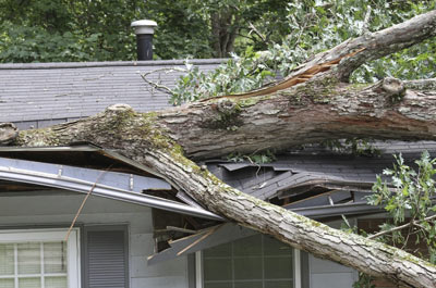 Tree collapse on roof